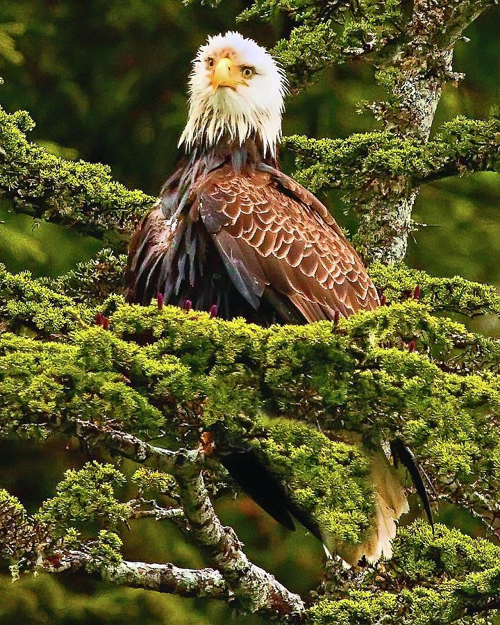 Alaska Photograph - Wet Head by David Wagner