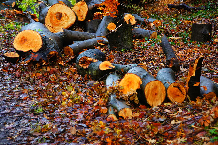 Edinburgh Photograph - Wet Logs by Nik Watt