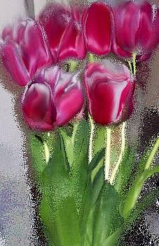 Hot Pink Photograph - Wet Tulips by Patricia A Williams