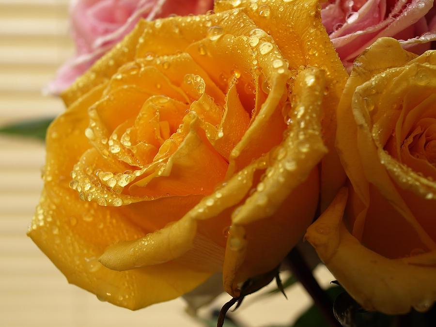 Rose Photograph - Wet Yellow Rose by Robert Gebbie