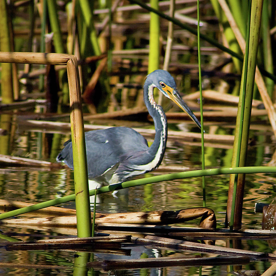 Alone Photograph - Wetlands Are My Home by Dawn Currie