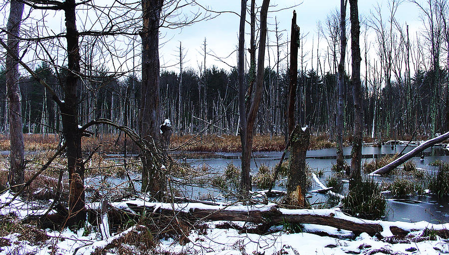 Forest Photograph - Wetlands In Winter Are Somber Yet Sublime by Terrance DePietro
