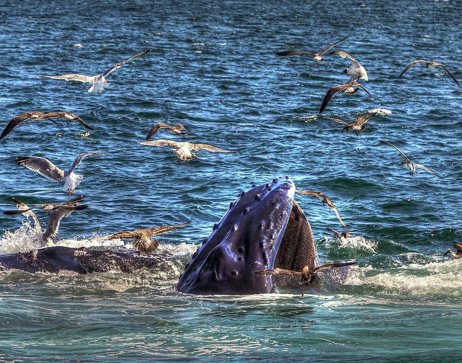 Whale 278 Photograph
