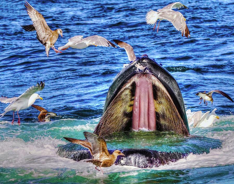 Whale 279 Photograph