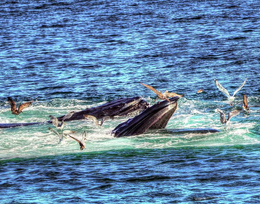 Whale 327 Photograph