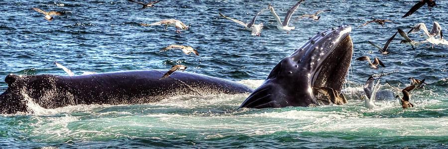 Whale 472 Photograph