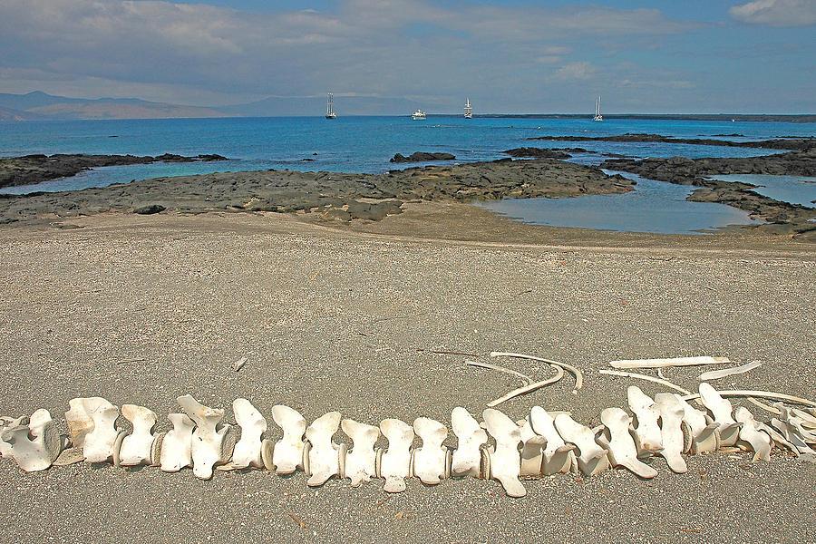 Galapagos Islands Photograph - Whale Bones by Alan Lenk