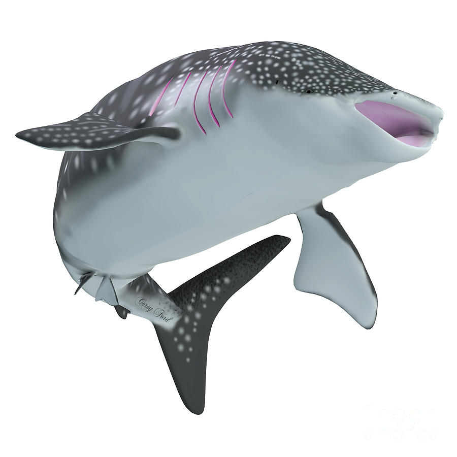 Whale Shark Body Painting by Corey Ford