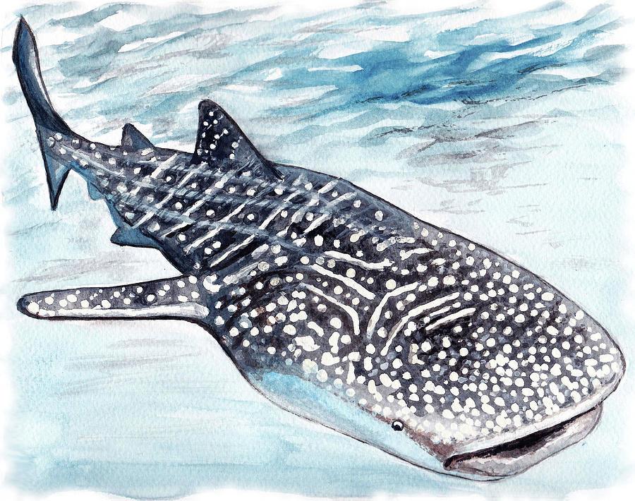 связана рисунок китовой акулы карандашом буквально накануне