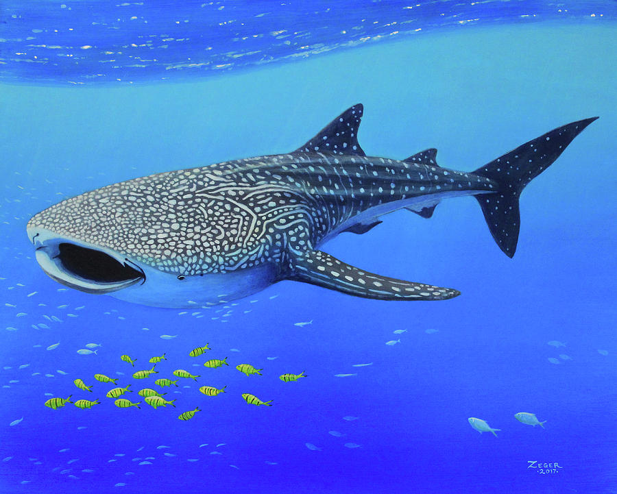 Shark Painting - Whale Shark by James Zeger