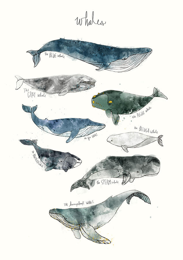 Whales Painting - Whales by Amy Hamilton