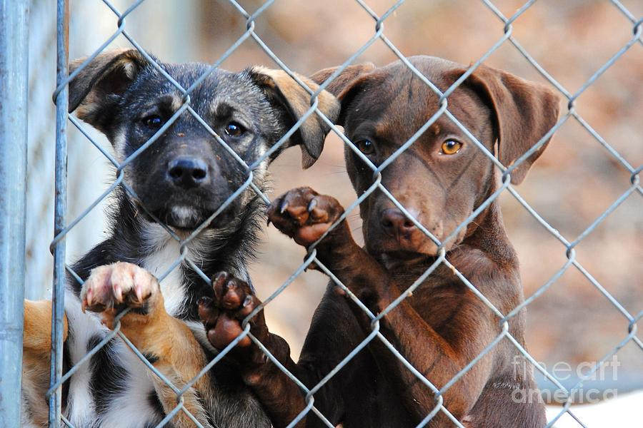 Puppies Photograph - What About Us by Jai Johnson