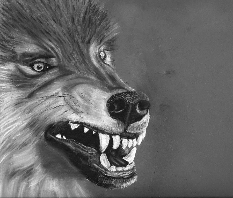 Wolf Drawing - What Big Teeth You Have by Jessica Kale