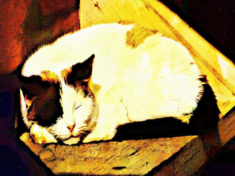 Cats Digital Art - What Do Cats Dream Of by Robert Grubbs