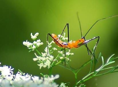 Insects Photograph - What Is Orange N Ugly by Linda Jackson