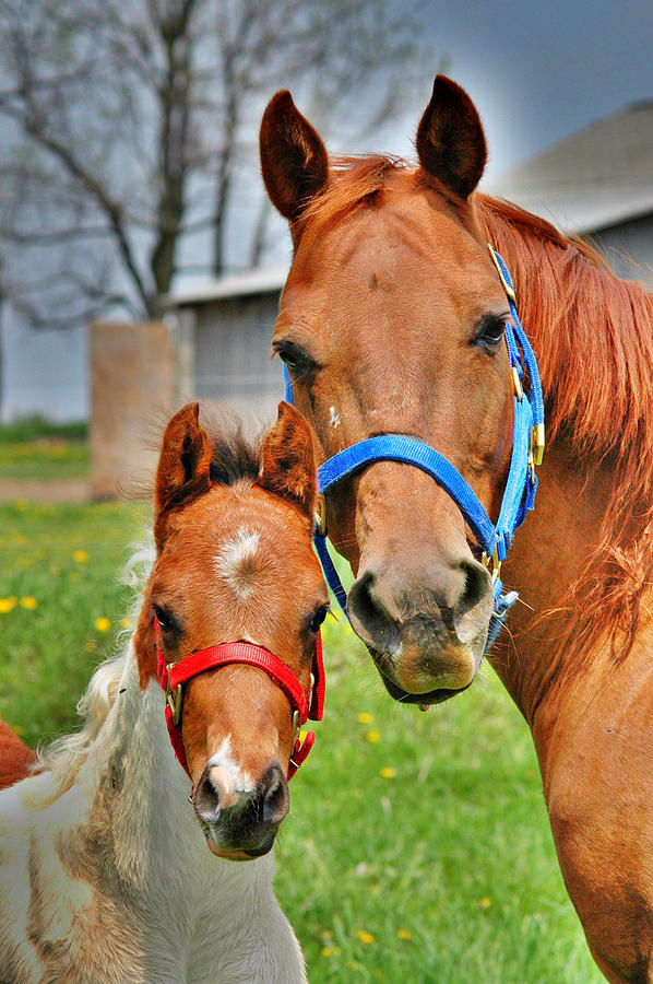 Horses Photograph - What Is Your Name by Emily Stauring