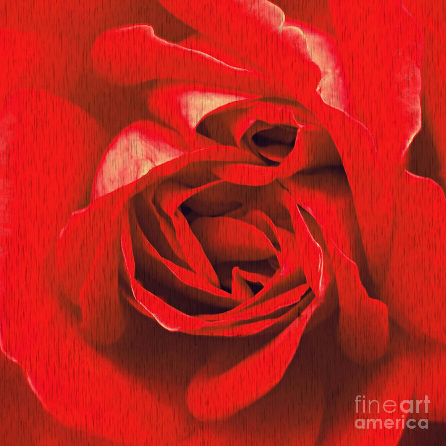 Whats in a rose? by Vix Edwards