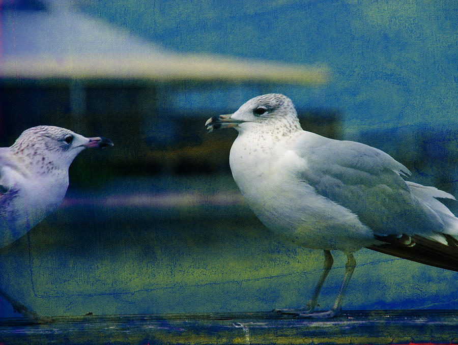 Seagulls Photograph - Whats Up Bro by Susanne Van Hulst