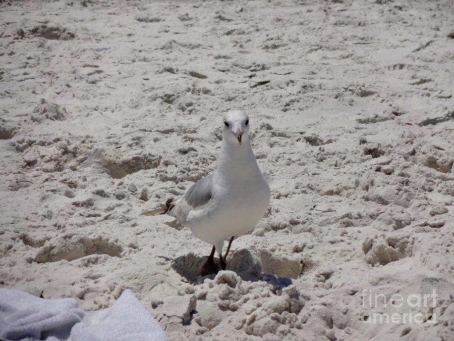 Seagull Photograph - Whats Up? by Megan Cohen