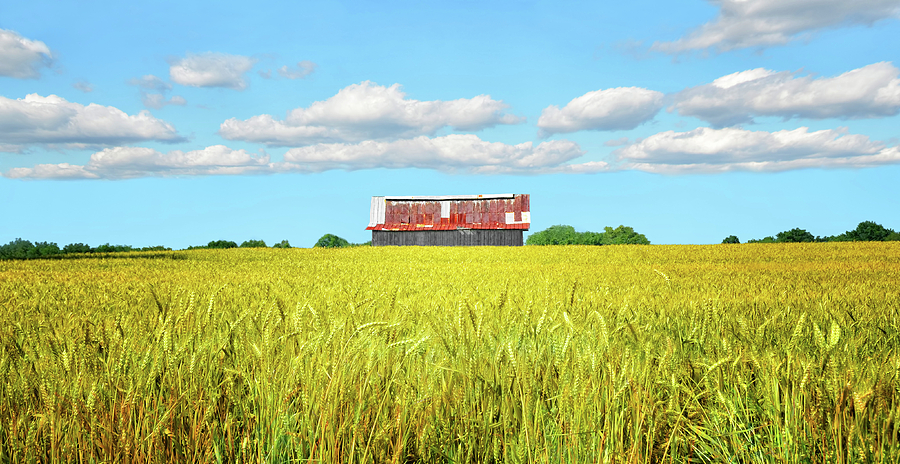 Wheat Farm Photograph by Steven Michael