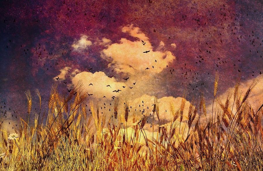 Bob Orsillo Photograph - Wheat Field Dream by Bob Orsillo