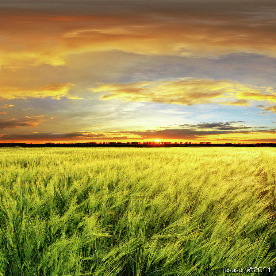 Wheat Field With Sunset Photograph by ©jesuscm