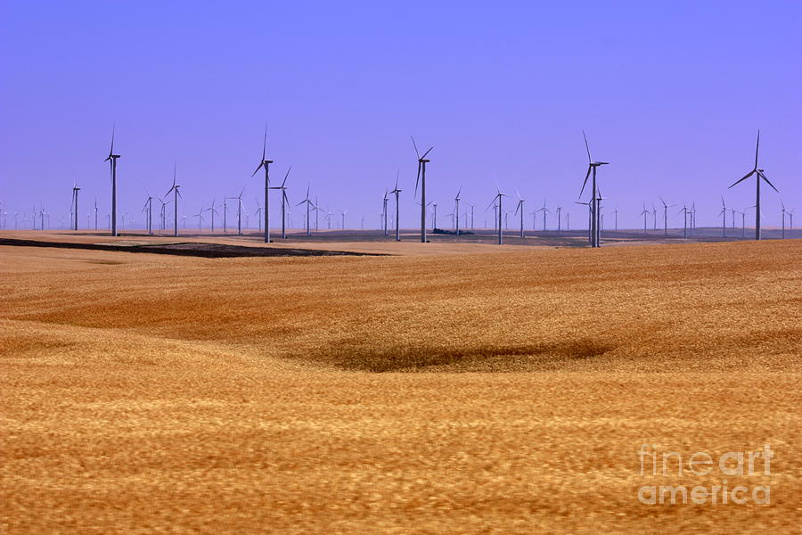 Wind Turbines Photograph - Wheat Fields And Wind Turbines by Carol Groenen