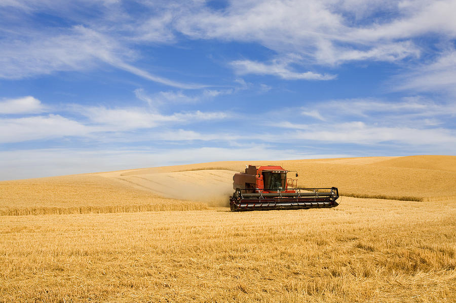 Combine Photograph - Wheat Harvest by Mike  Dawson