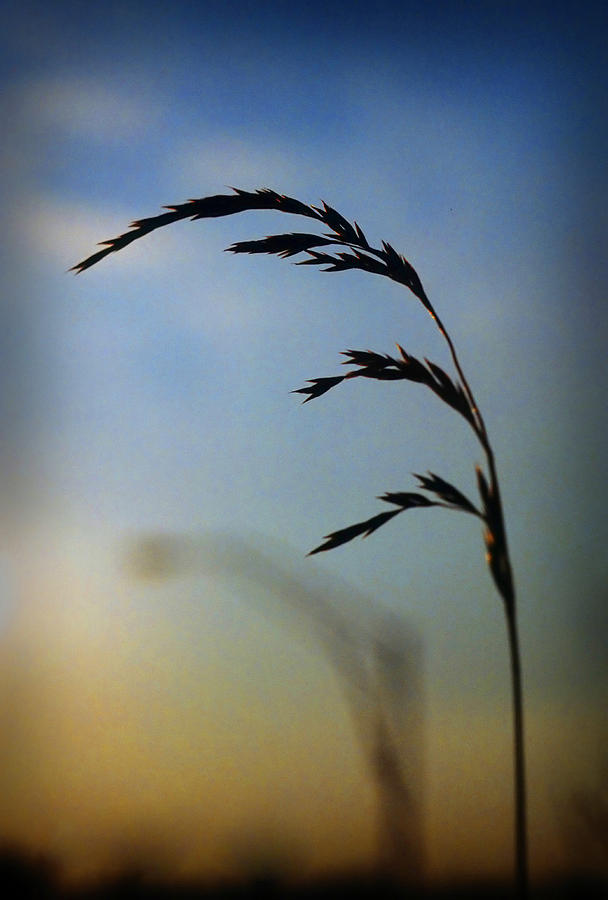 Nature Photograph - Wheat In Silhouette by Dave Chafin