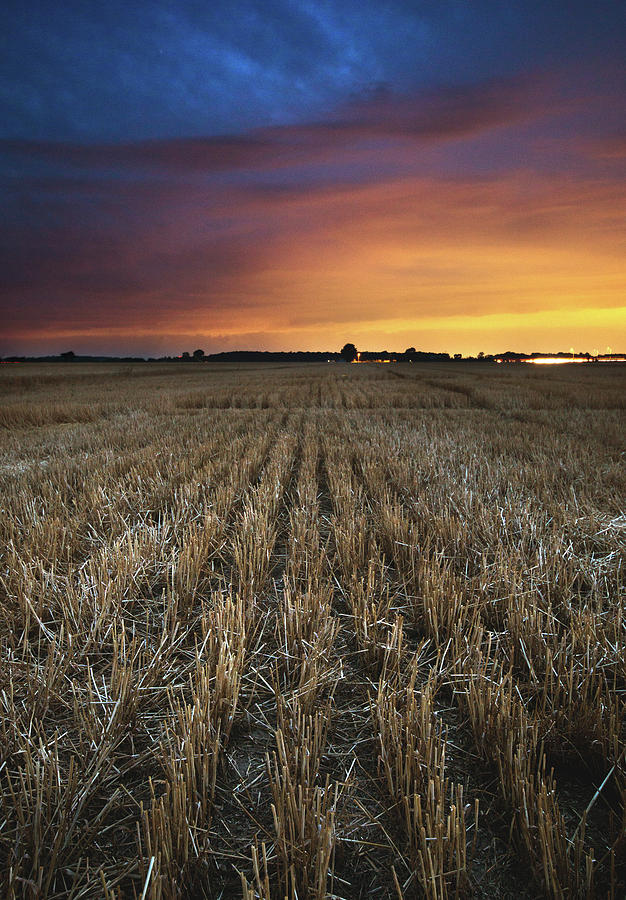 Wheat Rows After Sunset Photograph