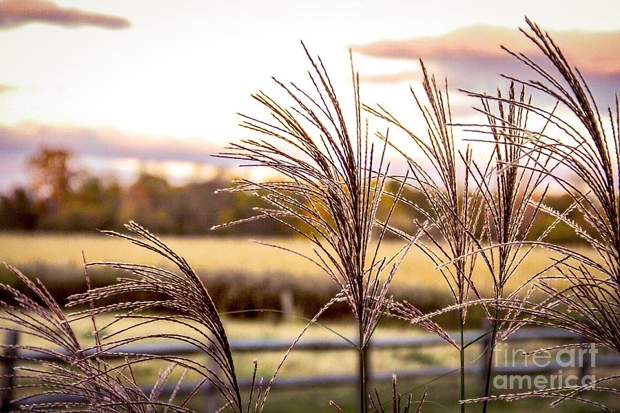 Sunset Photograph - Wheat Sunset by Keith Rousseau
