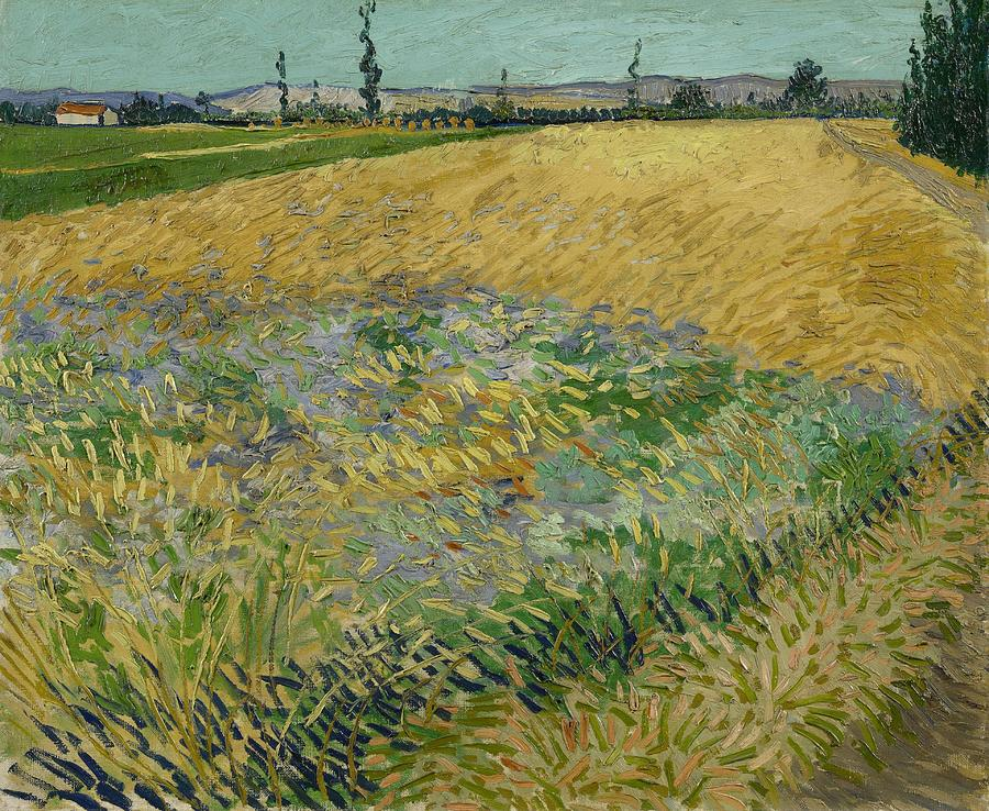 Nature Painting - Wheatfield Arles, June 1888 Vincent Van Gogh 1853 - 1890 by Artistic Panda