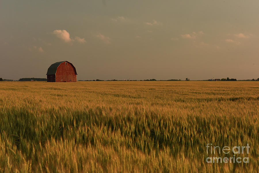 Wheatfield by Charles Owens