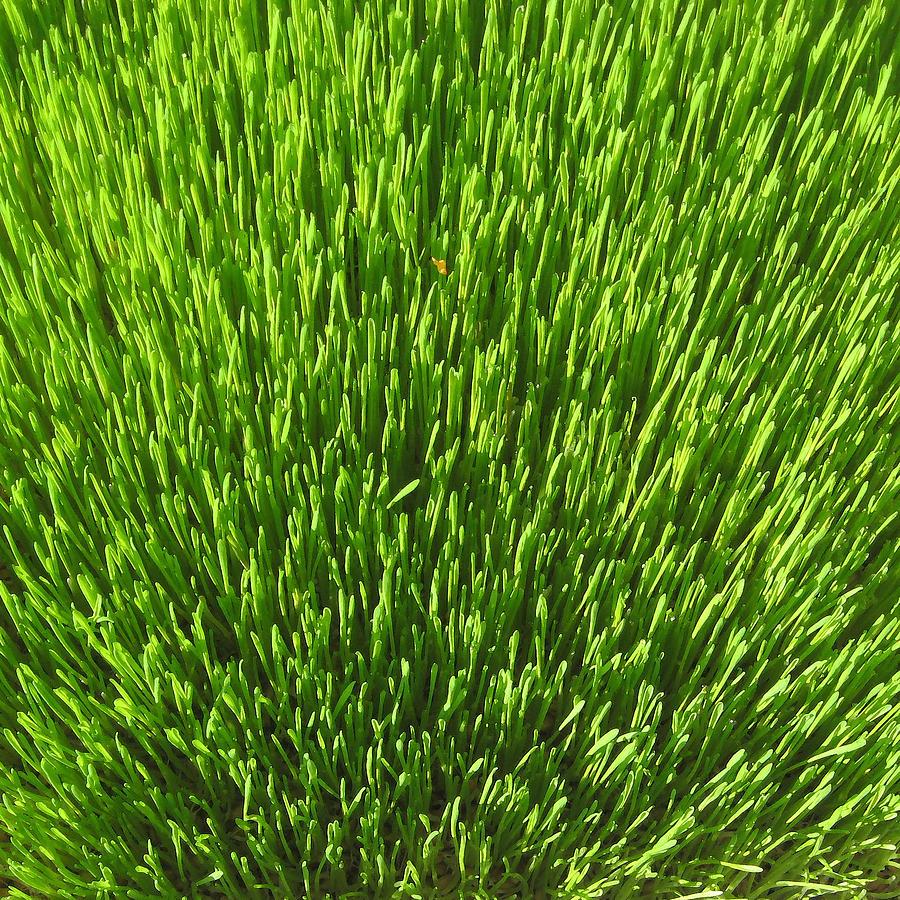 Wheatgrass by John Vincent Palozzi