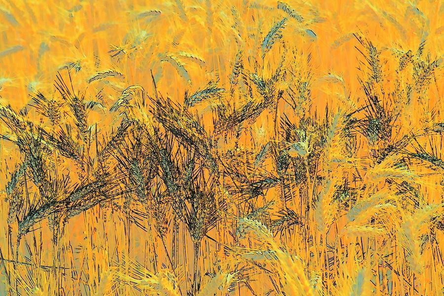 Wheatscape 6343 Photograph