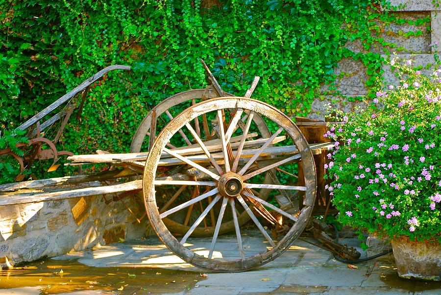 Garden Photograph - Wheel Of Happiness by Dorota Nowak