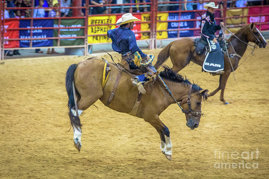 Rodeo Photograph - When A Horse Tries Hard  by Rene Triay Photography