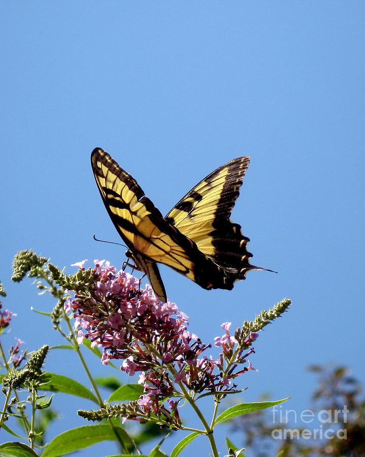 Butterfly Photograph - When Butter Flies by Terri Creasy