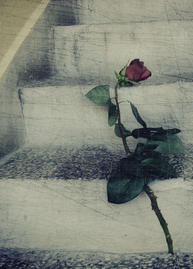 Rose Photograph - When Love Is Gone by Rosalina Atanasova