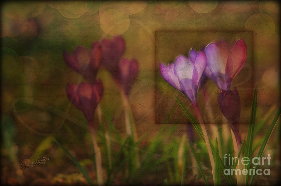Spring Photograph - When The Light Paints The Flowers by Joy Gerow