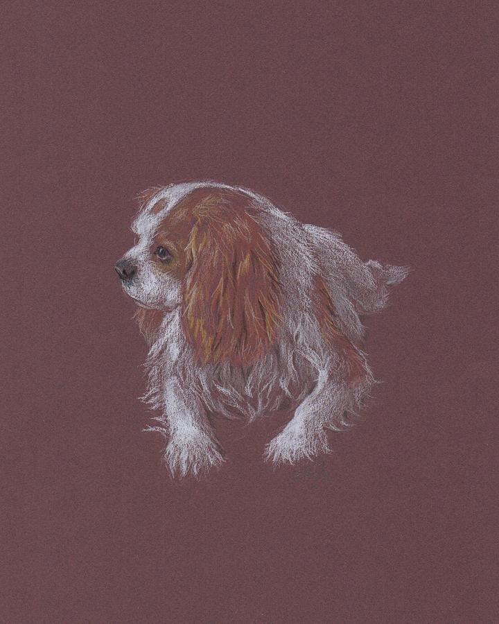 Cavalier King Charles Spaniel Drawing - Where Are You Going by Susan Coons