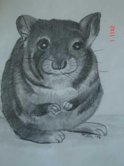 Chinchilla Drawing - Where Is Da Cheeze by Maureen Blakeley