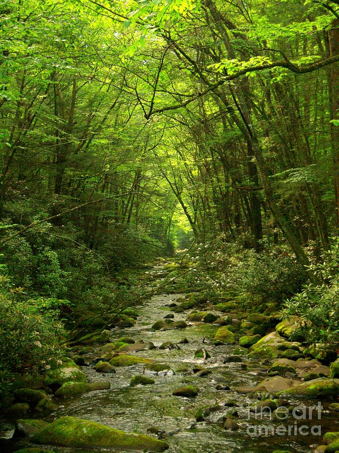 Stream Photograph - Where It Leads by Southern Photo