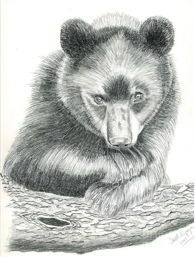 Black Bear Drawing - Where by Joette Snyder