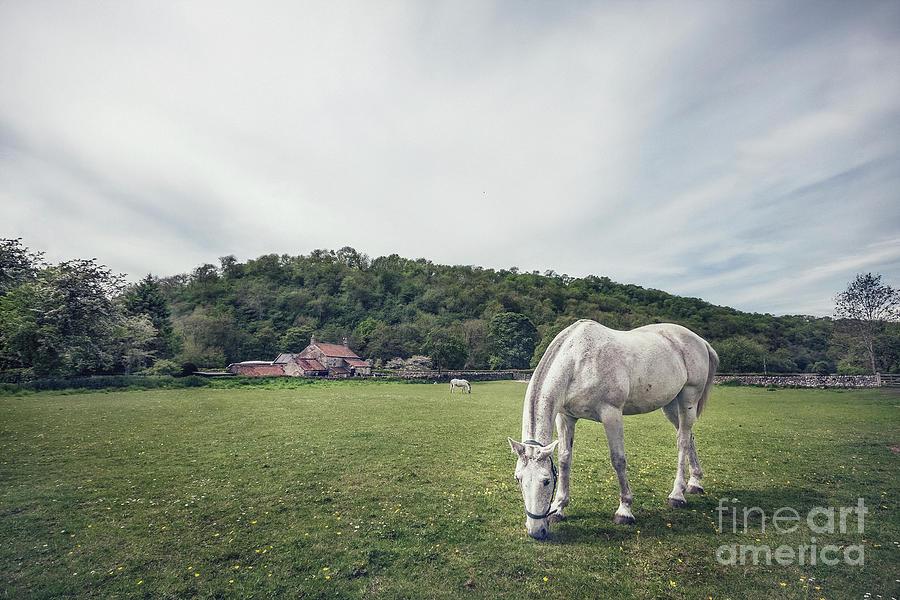 Animal Photograph - Where The Green Grass Grows by Evelina Kremsdorf