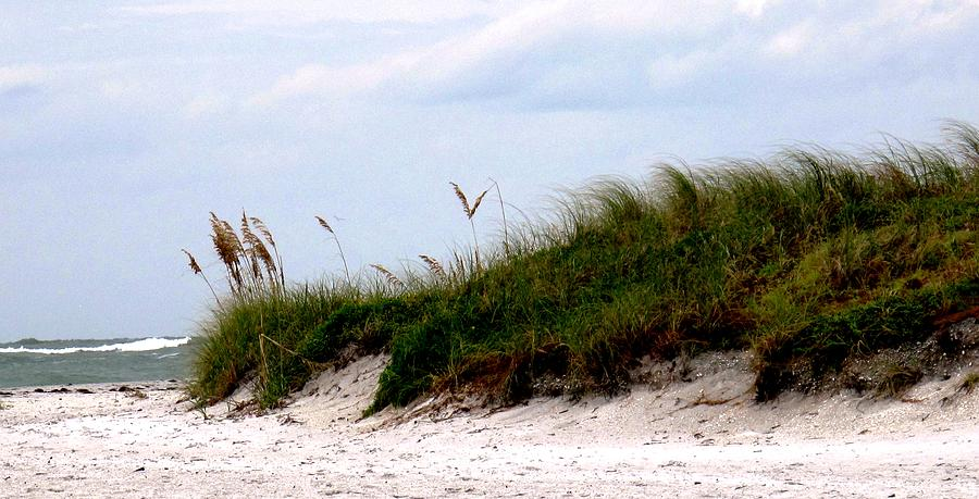 Florida Photograph - Where The Sea Wind Blows by Ian  MacDonald
