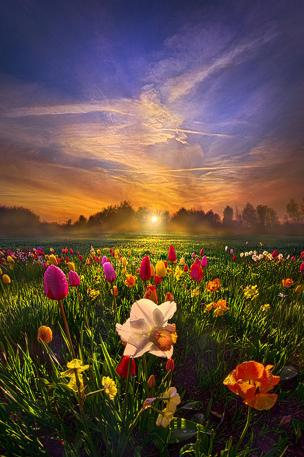 Tulips Photograph - Wherever The Journey Takes Us by Phil Koch