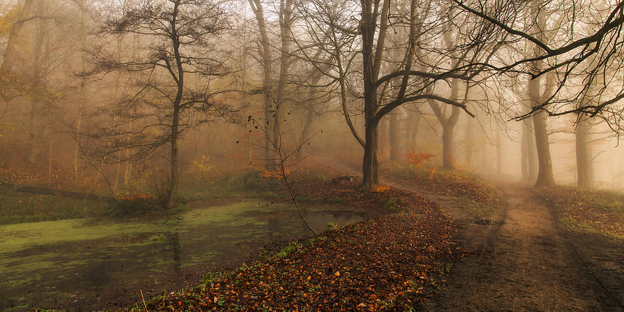 Landscape Photograph - Which Path II by Leif L?ndal