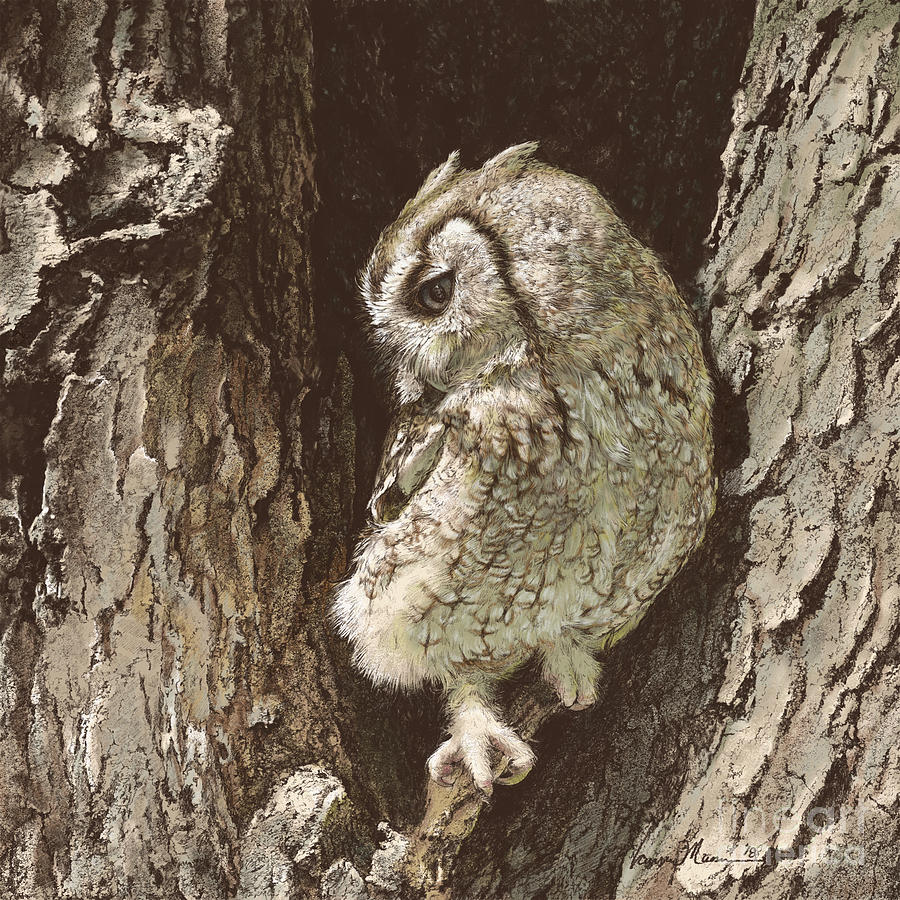 Screech Owl Drawing - Whinny by Laurie Musser