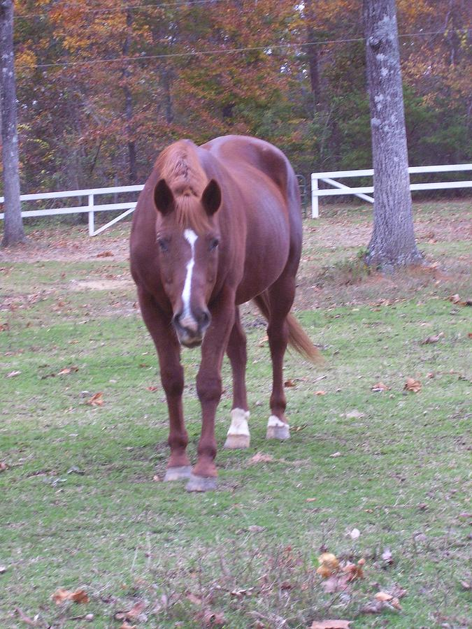 Horse Photograph - Whiskey by Kristen Hurley